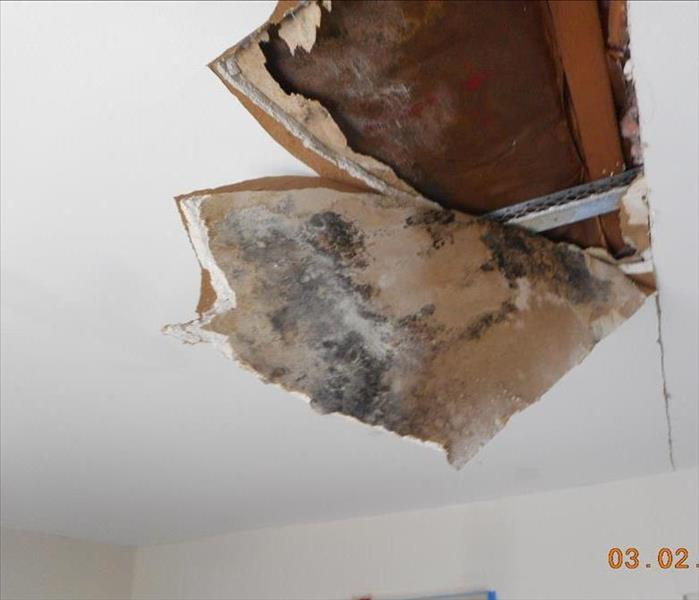 Mold Damage to a Ceiling in Galloway, NJ