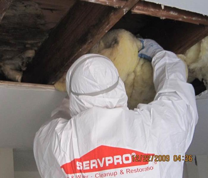 "Mold Remediation 8 Bad ""Facts"" About Mold That Everyone Thinks Are True"
