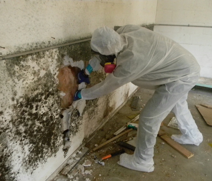 Mold Remediation Understanding Mold