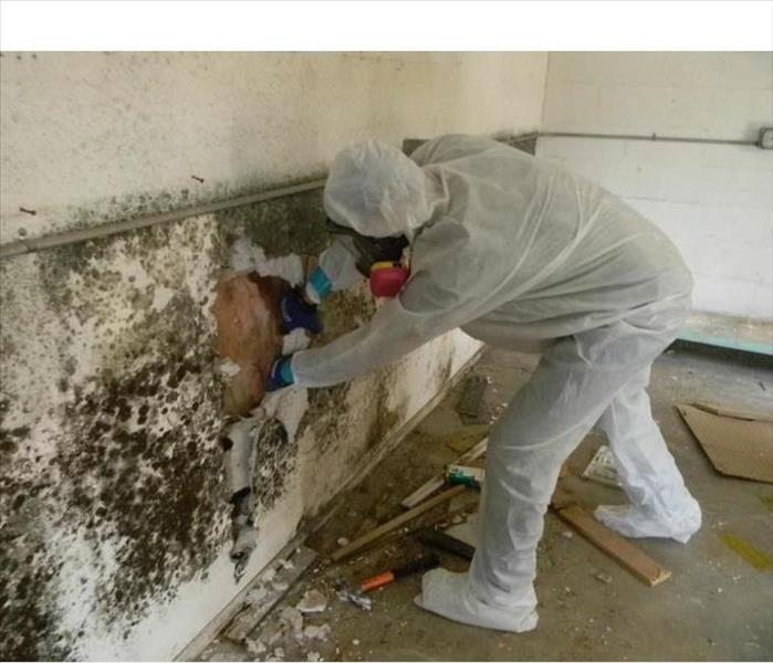 Mold Remediation  For Immediate Service, Call SERVPRO in Atlantic City, NJ 609-965-0885